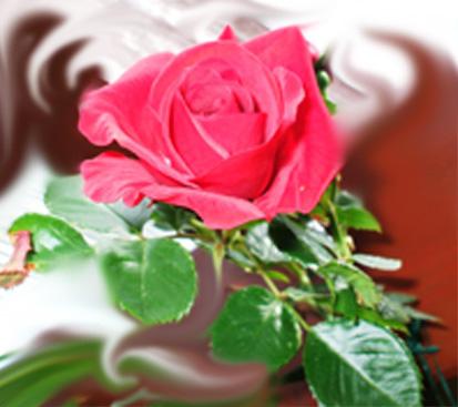 miri-rose_bearbeitet-1